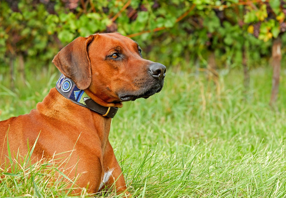 3 Features To Look For When Buying A Bark Collar For Your Dog