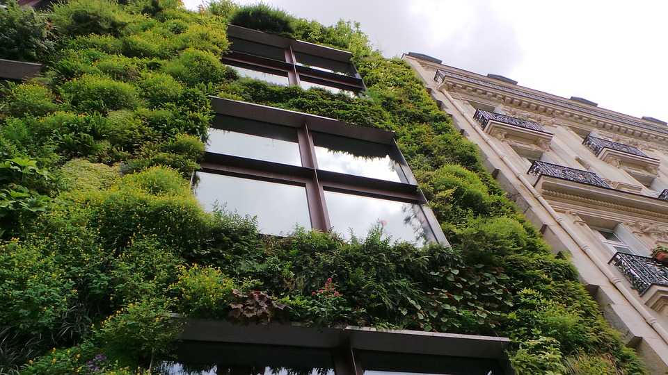 Why You Need To Install ECO Green Walls