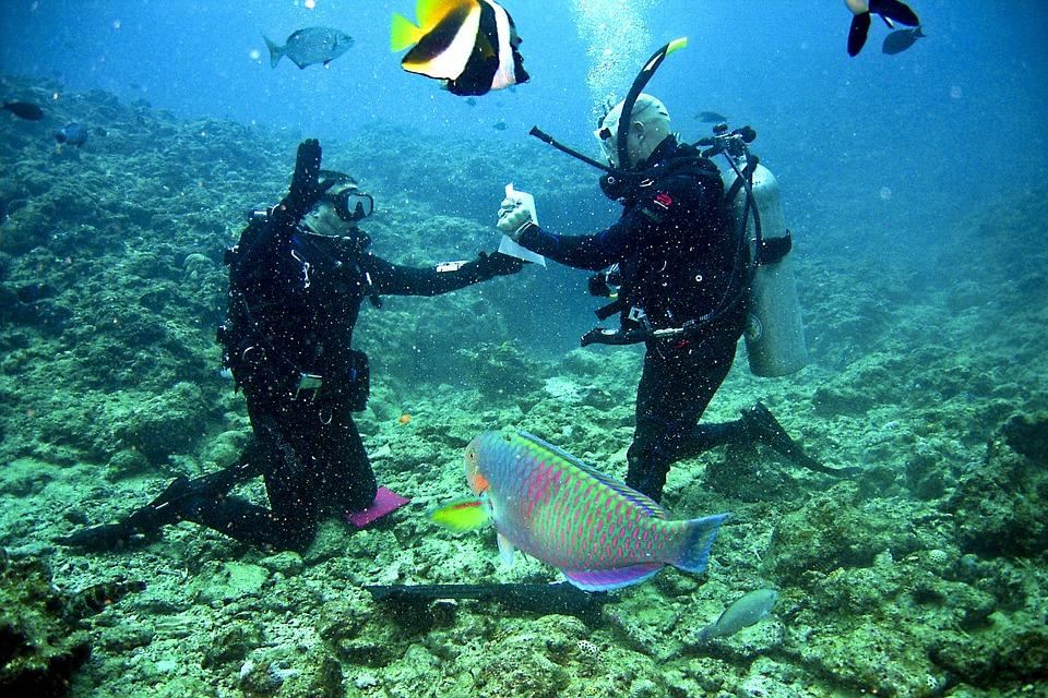 What Dive Instructor Courses Do I Need To Become A Certified Scuba Instructor?