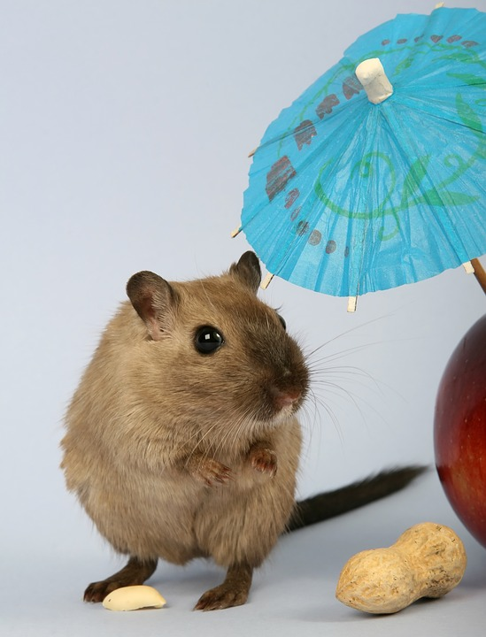 Reasons You Should Invest In Mobile Hamster Balls