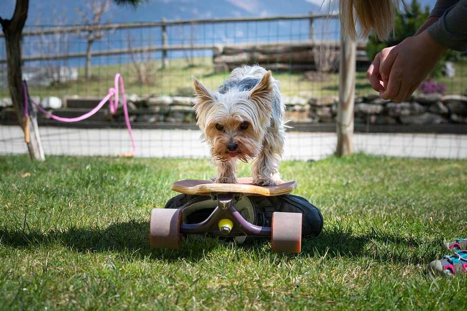 Types Of In Home Dog Training