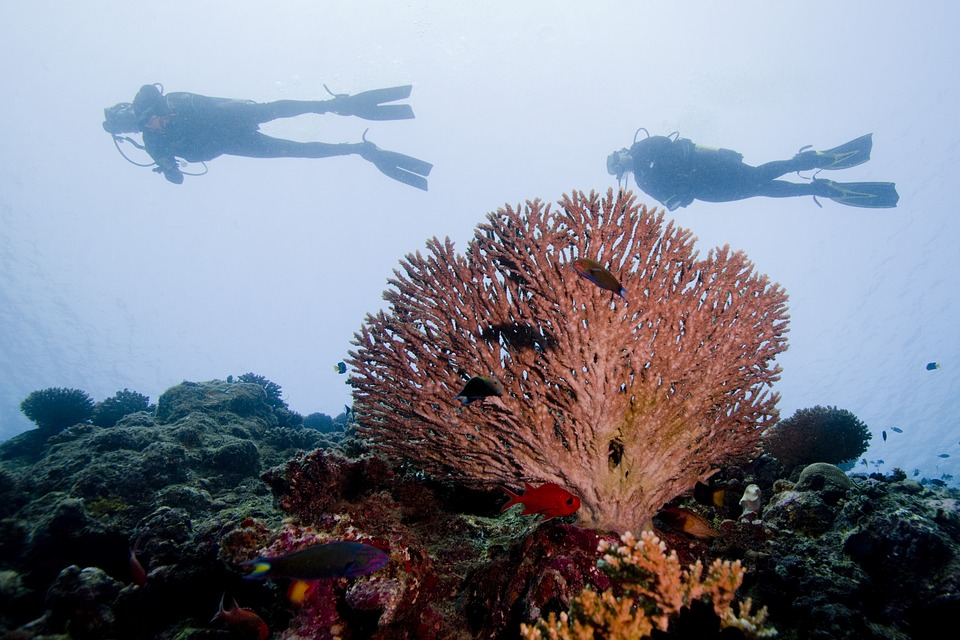 Compare The Best Dive Instructor Courses