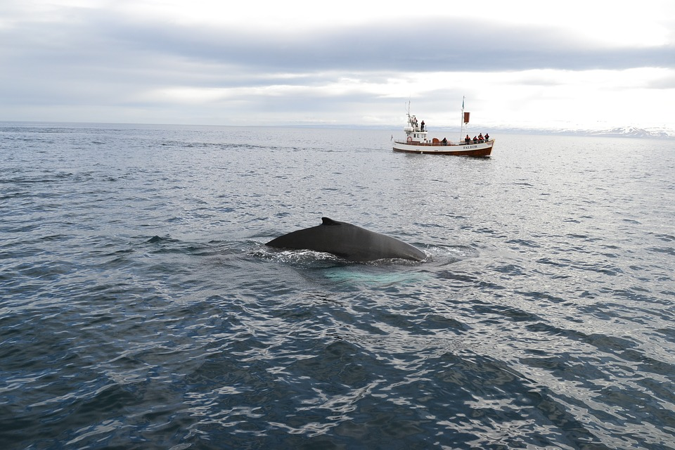Cape Cod Whale Watching Tours – Fun For Everyone