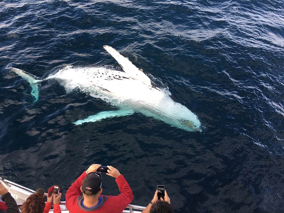 Fraser Island Whale Watching Tours In Australia