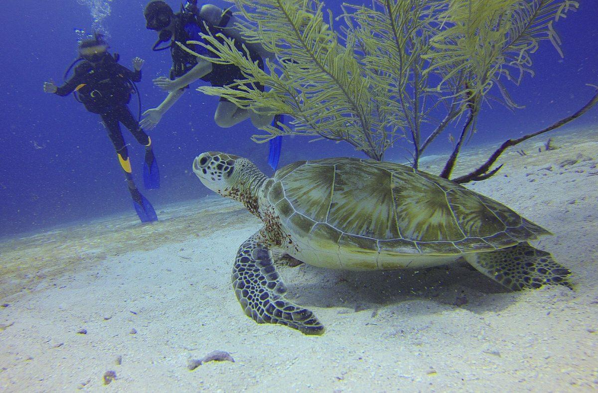 Remarkable Koh Phi Phi Diving Sites