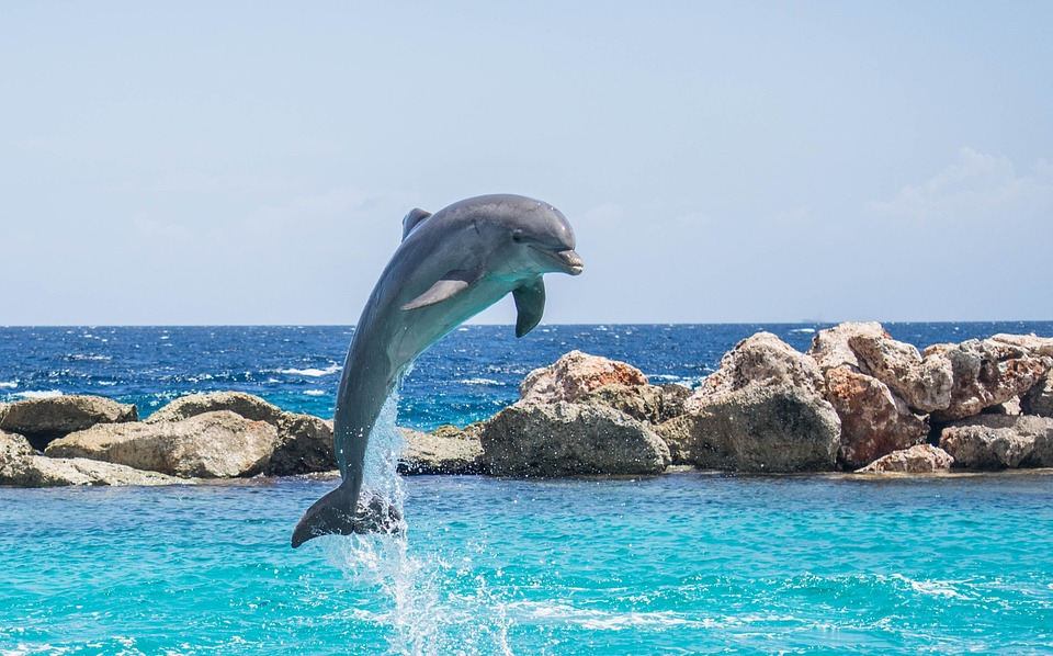 3 Reasons For Sunset Dolphin Cruise Popularity