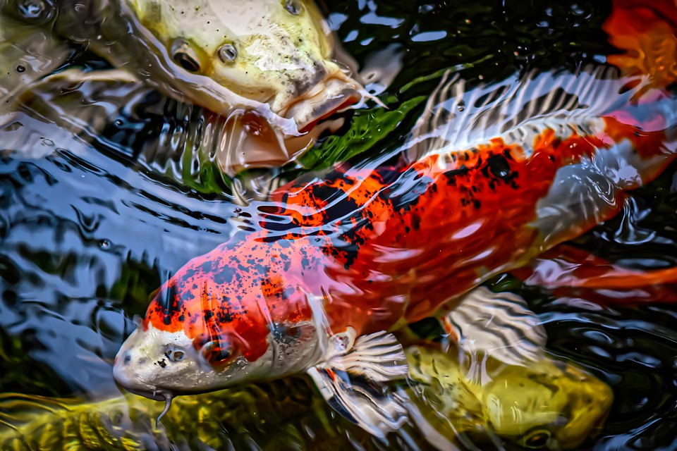 Things To Consider When Buying Pond Sticks For Your Fish